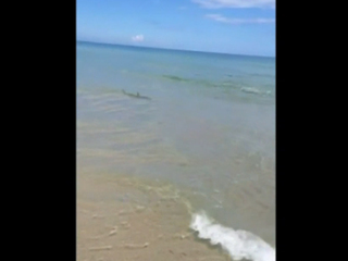 Group of sharks found close to Palm Beach shore
