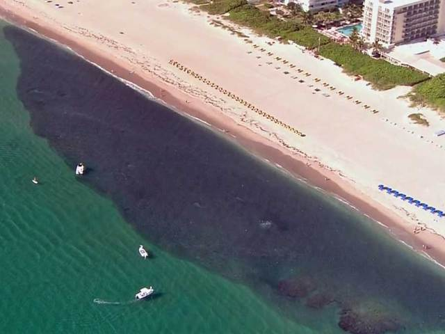 Video huge throng of bait fish spotted off palm beach for Mullet fish bait