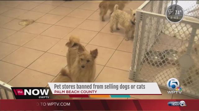 Cat pet store houston