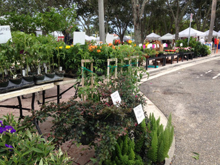 West Palm Beach Green Market kicks off downtown