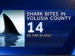 2 surfers bitten by sharks in Central Florida
