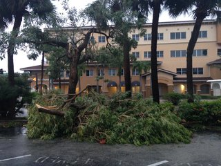 Damage from Matthew: Power out, trees down