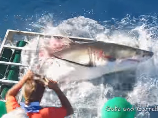 VIDEO: Shark breaks into cage with diver inside