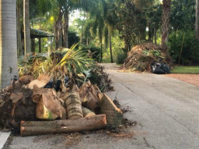 Piles of storms debris waiting for pick up