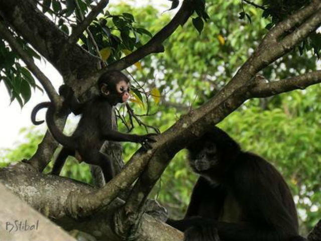 You can help name Mexican spider monkey