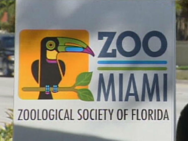 Tiger bites zookeeper's finger at Zoo Miami