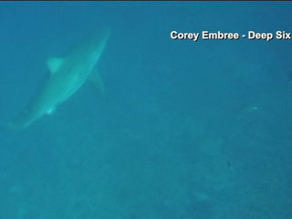 Great white sharks spotted off Florida coast