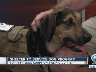 Adoption clinic partners service dog with vets