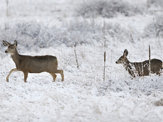 Snow blankets parts of North Carolina, Virginia