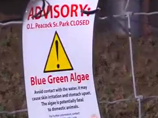 Possible toxic algae found in Port St. Lucie