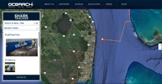 Katherine the great white shark off Lake Worth
