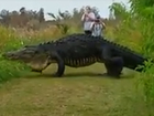 Real or fake? Big Fla. gator caught on camera