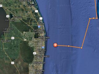 Katharine the great white shark off Lake Worth