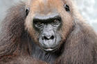 Harambe's grandmother dies at Zoo Miami