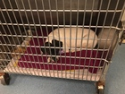 Dog thrown from bridge recovering at ACC