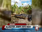 Gator jumps into Florida airboat