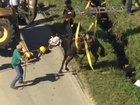 Horse rescued from So. Fla. ditch