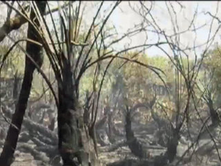 Growing wildfire threat in South Florida
