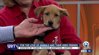 'Shelter to Service Dog' event Feb. 10