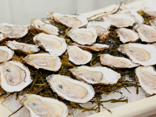 New bacterial strain can contaminate shellfish