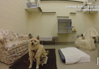 Dogs rescued from meat market up for adoption