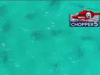 Blacktip sharks make appearance later than usual