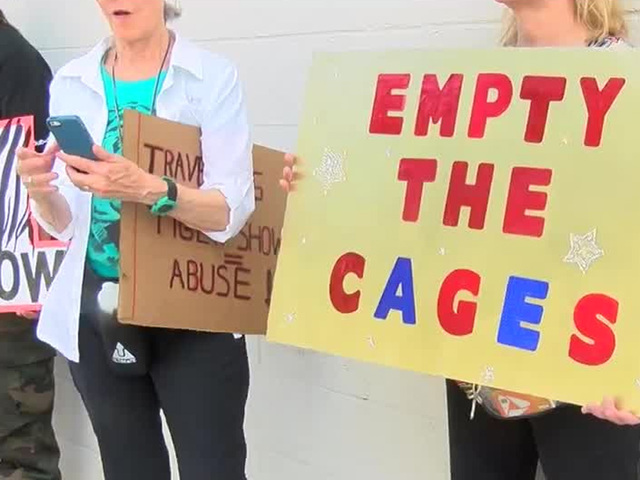 Group gathers to protest tiger show in Martin County