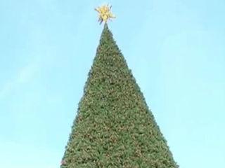 Delray considers buying new $800K Christmas tree