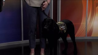 'Charlie' the 'Today' show puppy visits WPTV