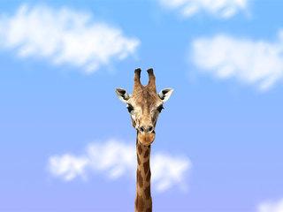 Live giraffe birth cam creates controversy