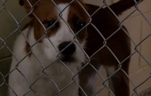 Florida bill seeks to make it harder for shelters to euthanize animals