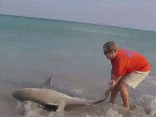 VIDEO: Shark rescued on Jensen Beach