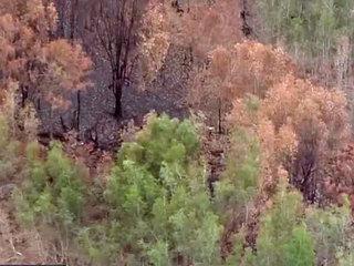 Florida Forest Service not authorizing burns