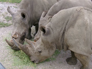 Lion Country reacts to rhino killed at Paris zoo
