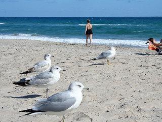 No swimming ban lifted at Delray Beach