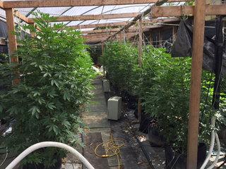 Cops: Grow house busted in Okeechobee County