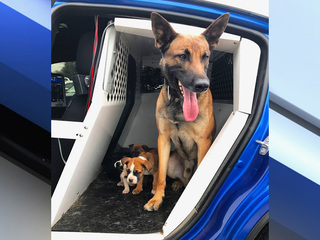 Trooper takes abandoned puppies and adopts them