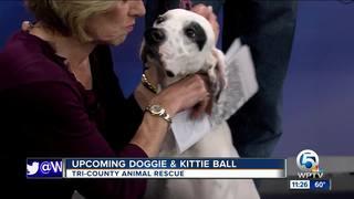 Tri-County Animal Rescue's Doggie & Kittie Ball