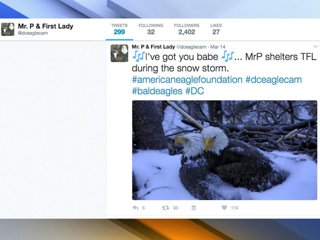 Eaglet hatches at DC police academy