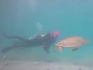 Diver helps turtle in distress