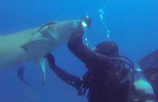Local diver helps remove hook from shark