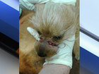Dog found with mouth bound