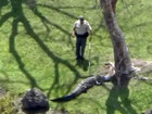 Alligator found tied to a tree in So. Fla.