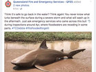 Sharknado? Cyclone leaves behind shark in puddle