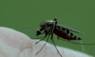 Mosquito control working to prevent Zika virus