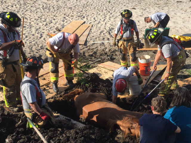 Horse stuck in mud freed after delicate rescue operation