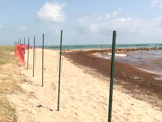 Beach renourishment projects underway