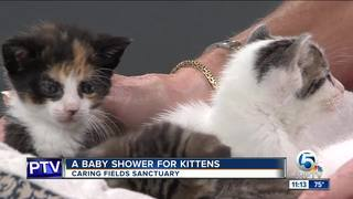 Baby shower for kittens on April 30
