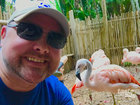 Feed flamingos at the Palm Beach Zoo for $35