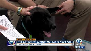 Dangers of summertime heat to your pets